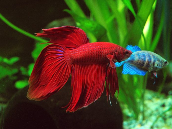 10 Betta Fish Tanks