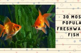 30 MOST POPULAR FRESHWATER FISH