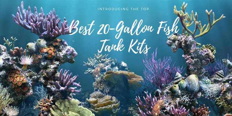 Best 20-Gallon Fish Tank Kits Review