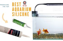 Best Aquarium Silicone Reviews