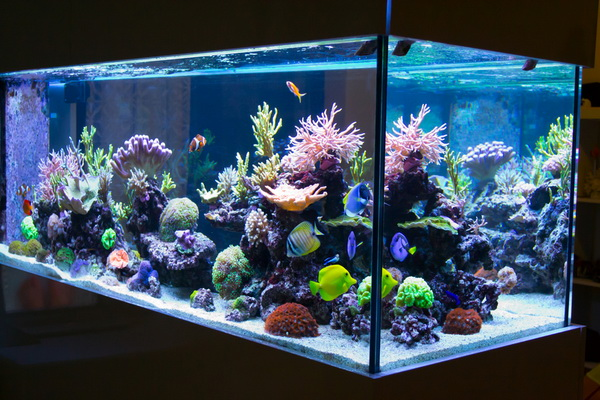 Best Aquarium Silicone -in 2020 Reviews