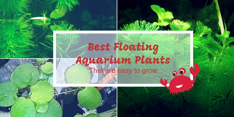 Best Floating Aquarium Plants