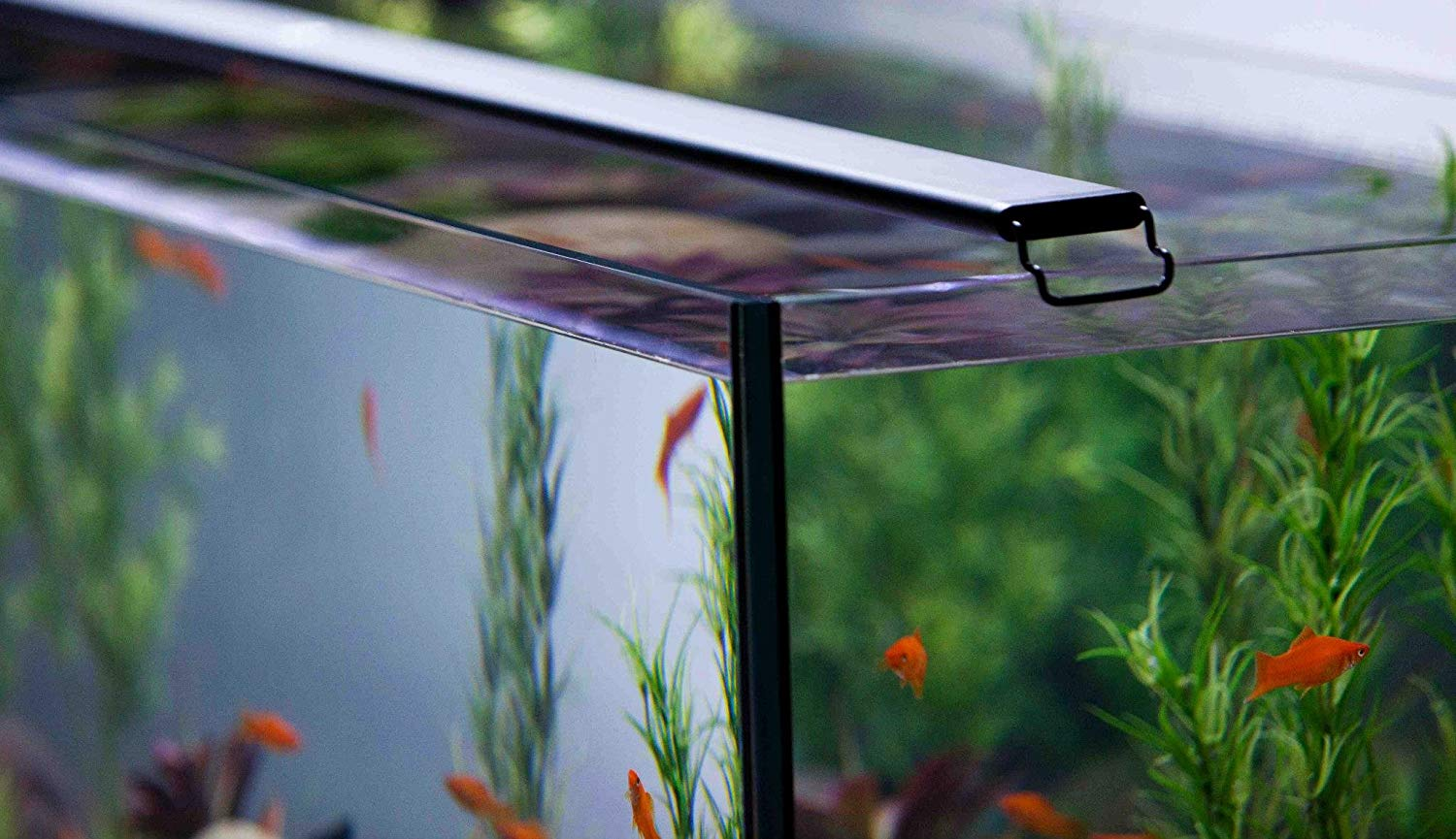 Best LED Lights for Planted Tank