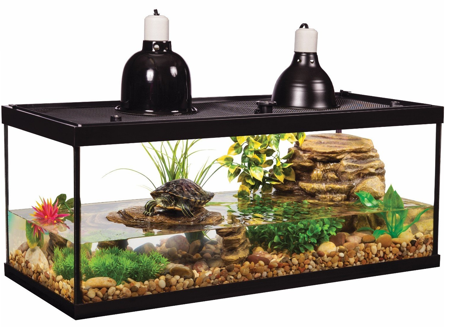 Best Review 20-Gallon Fish Tank Kits