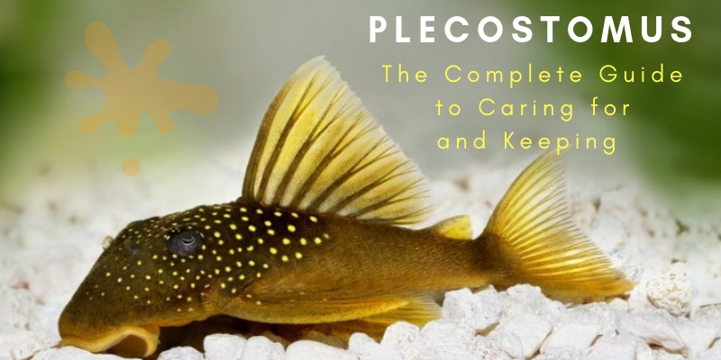 The Complete Guide to Caring for and Keeping Plecostomus