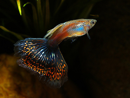Ditch The Dictionary! Try These Awesome Names For Your New Fish