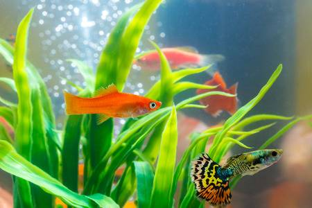The Complete Guppy Care Guide 6