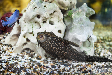 The Complete Plecostomus Care Guide 3