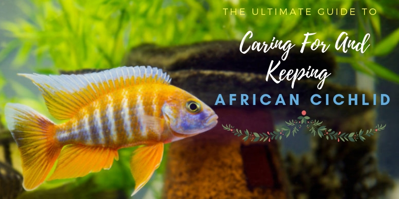 The Ultimate African Cichlid Guide
