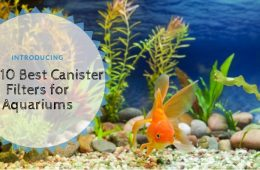 Top 10 Best Canister Filters for Aquariums