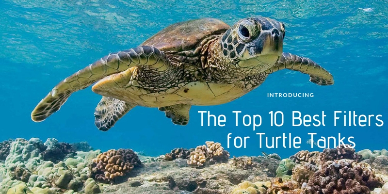 Top 10 Best Filters for Turtle Tanks