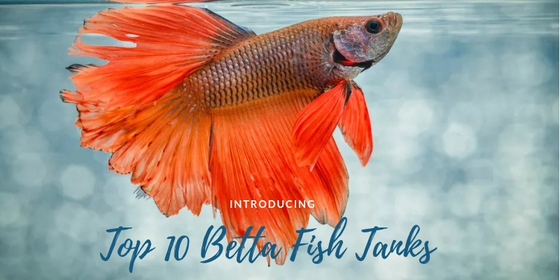 Top 10 Betta Fish Tanks In 2019 Reviews