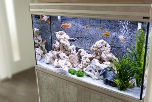 Top 8 Fish Tank Kits