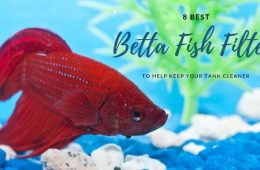8 Best Betta Fish Filters To Help Keep Your Tank Cleaner