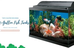 Best 10-Gallon Fish Tanks Perfect For Your Home