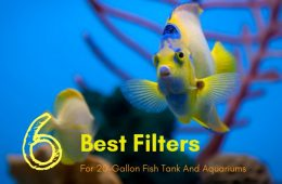 Best Filters For 20-Gallon Fish Tank And Aquariums