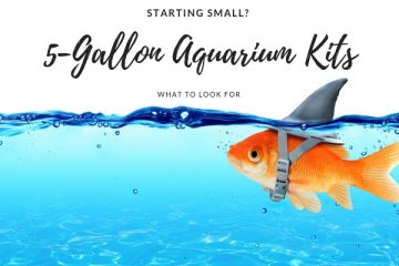 Best Review 5-Gallon Aquarium Kits