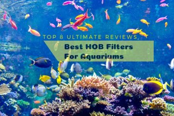 HOB Filters For Aquariums