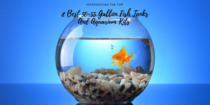 Review Best 50-55 Gallon Fish Tanks