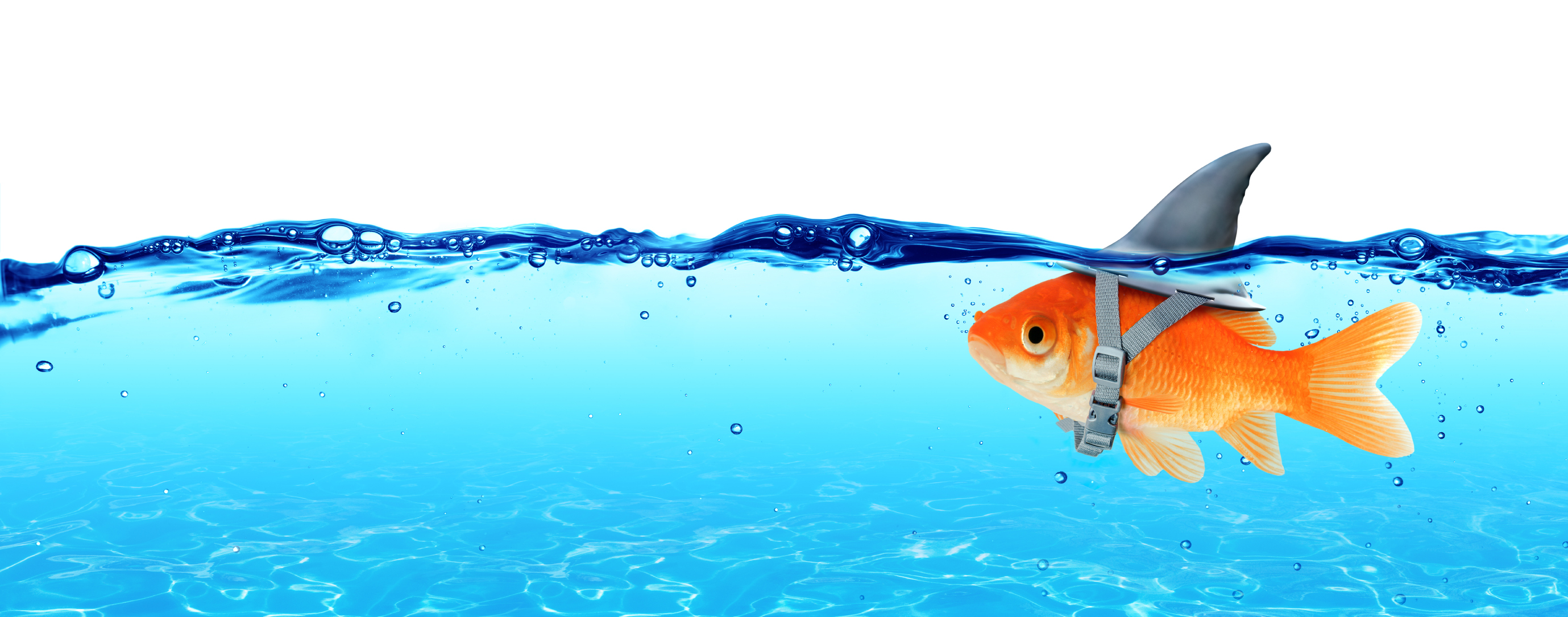 Reviews Best Goldfish Tanks For New Fish Keepers