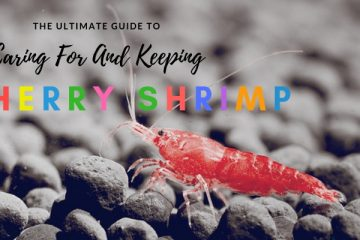 The Ultimate Guide To Caring For And Keeping the Cherry Shrimp 1