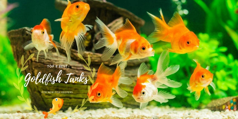 Top 8 Best Goldfish Tanks For New Fish Keepers