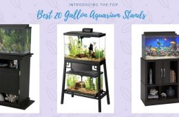 Best 20 Gallon Aquarium Stands