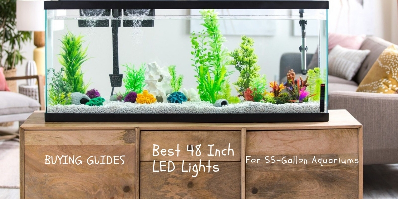 Best 48 Inch LED Lights For 55-Gallon Aquariums