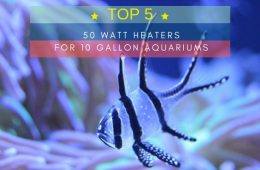 Top 5 Best 50 Watt Heaters for 10 Gallon Aquariums
