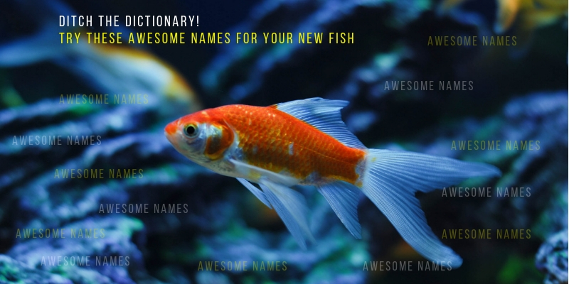 Names For Your New Fish