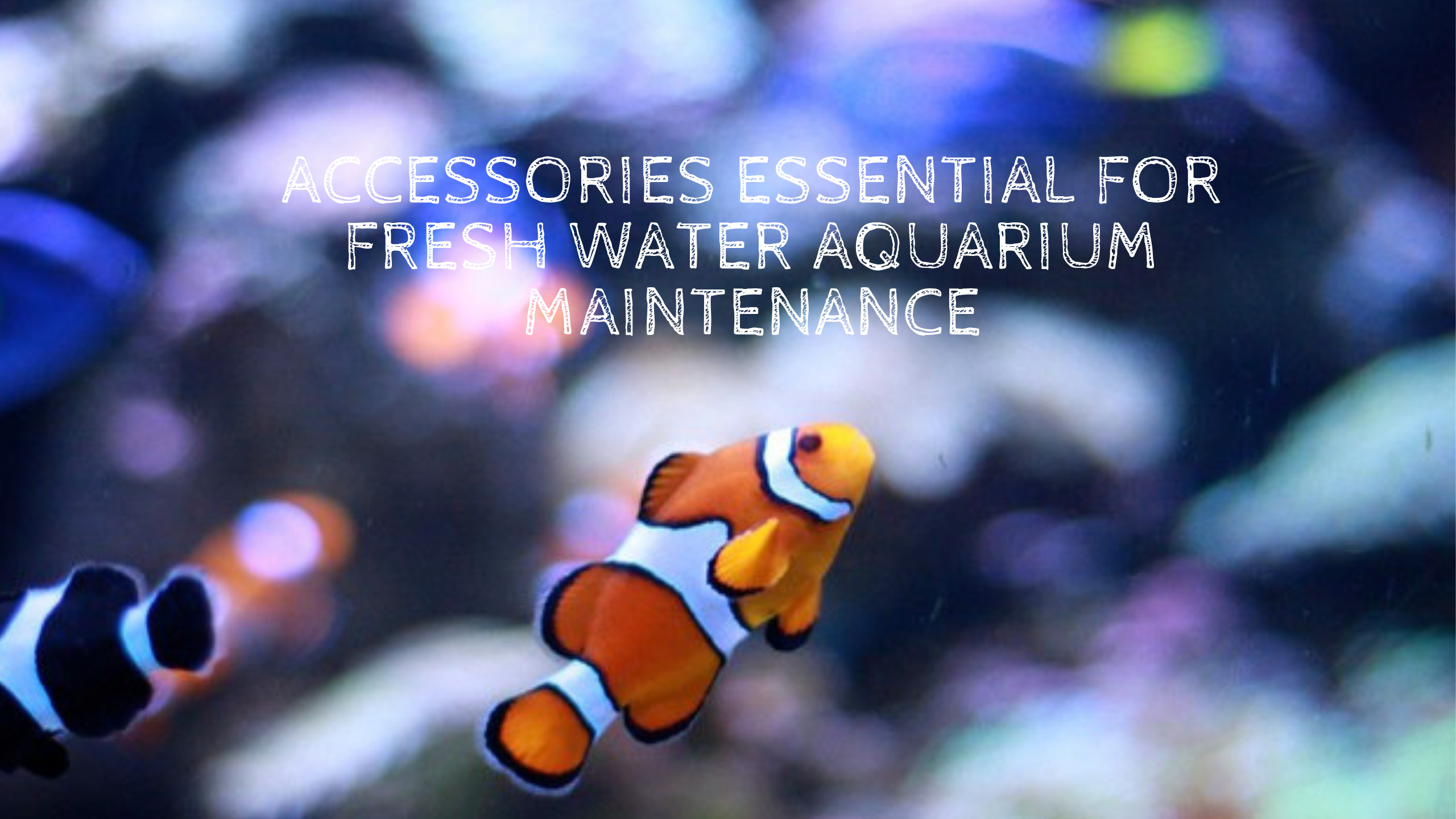 Accessories Essential For Fresh-Water Aquarium Maintenance
