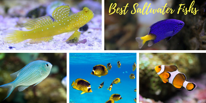 Best Saltwater Fish