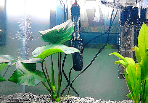 What Do You Need For A Fish Tank 15 Things Fish Life Today