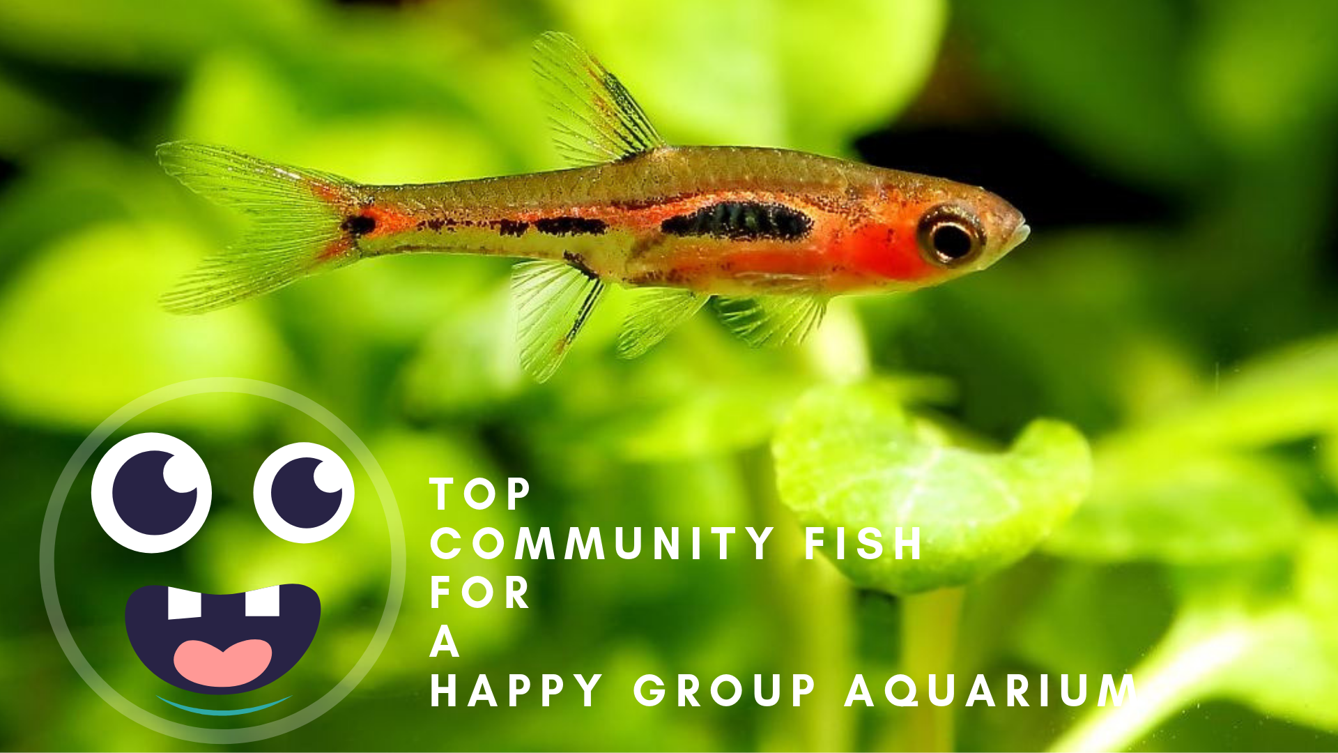 Happy Group Aquarium
