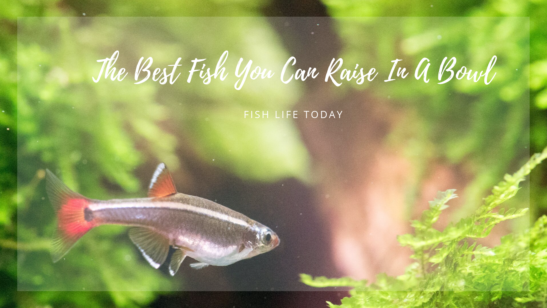 The Best Fish You Can Raise In A Bowl