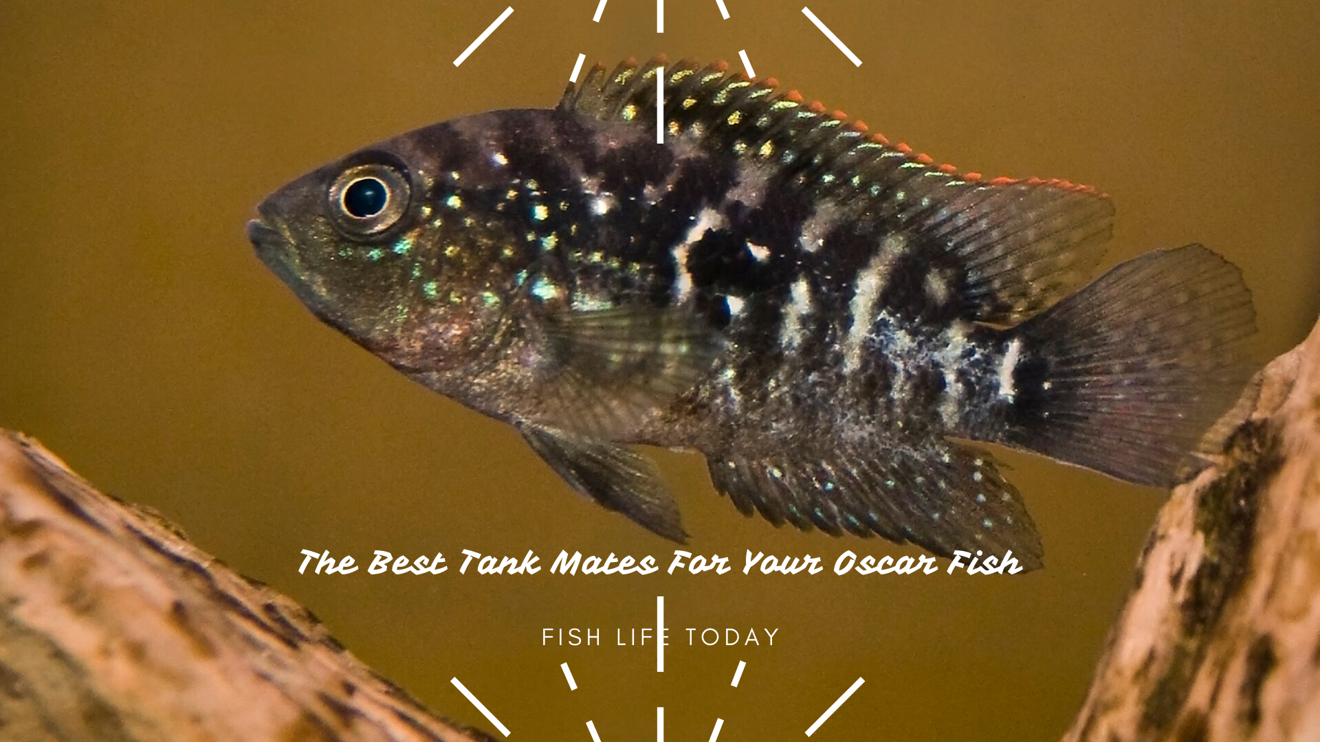 The Best Tank Mates For Your Oscar Fish